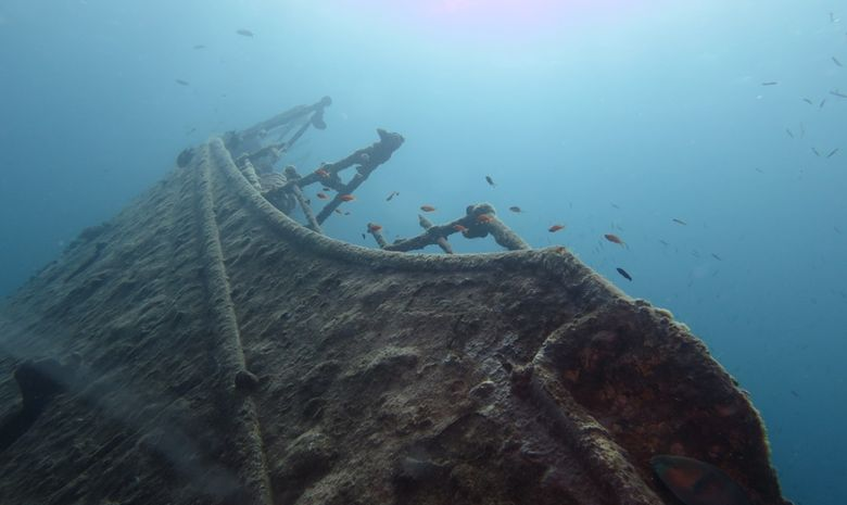 Croisière plongée découverte des pélagiques Nord-4