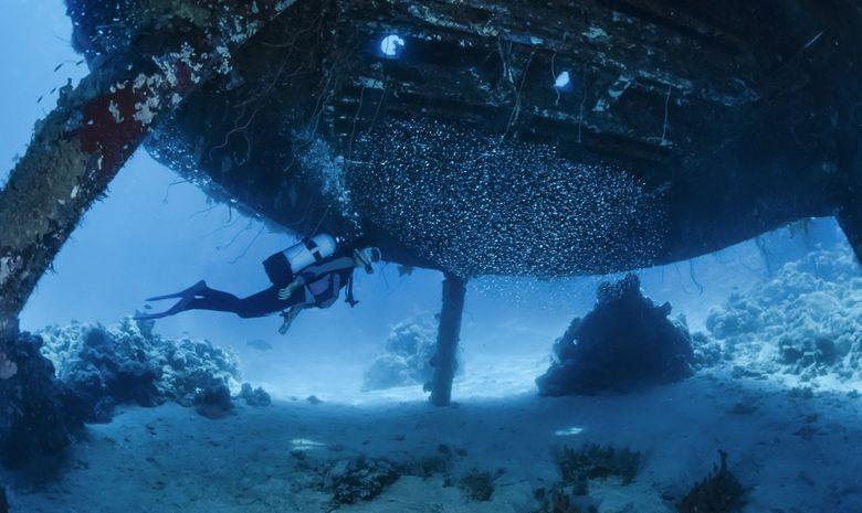 Croisière plongée découverte des pélagiques Nord-8