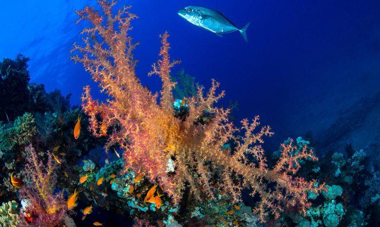 Croisière plongée découverte des sites de Safaga-9