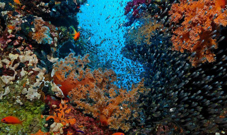plongée découverte des sites de Safaga-12