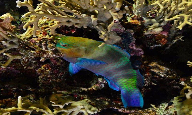 plongée parmi les perles du sud égyptien-7