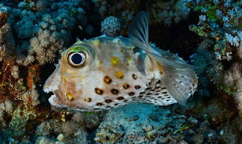 plongée parmi les perles du sud égyptien-6