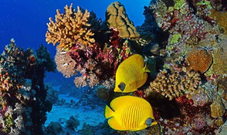 plongée parmi les perles du sud égyptien-5