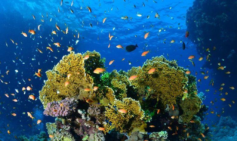 plongée parmi les perles du sud égyptien-1