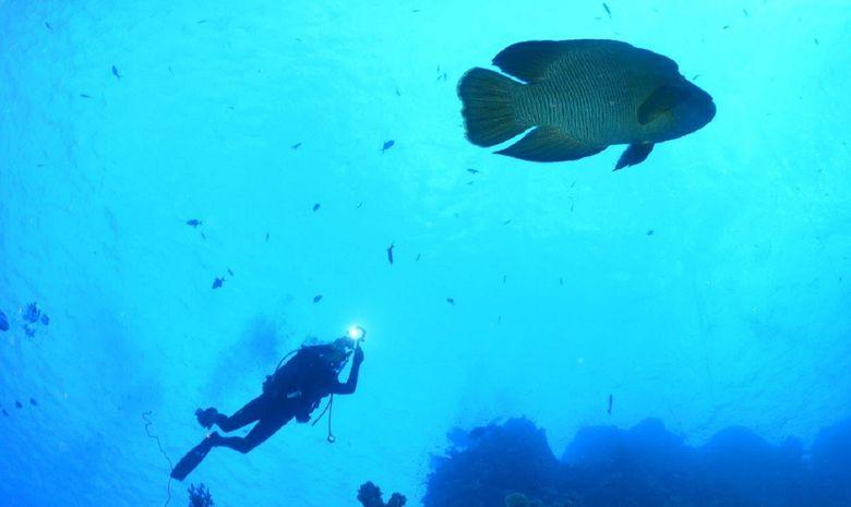 plongée parmi les perles du sud égyptien-3