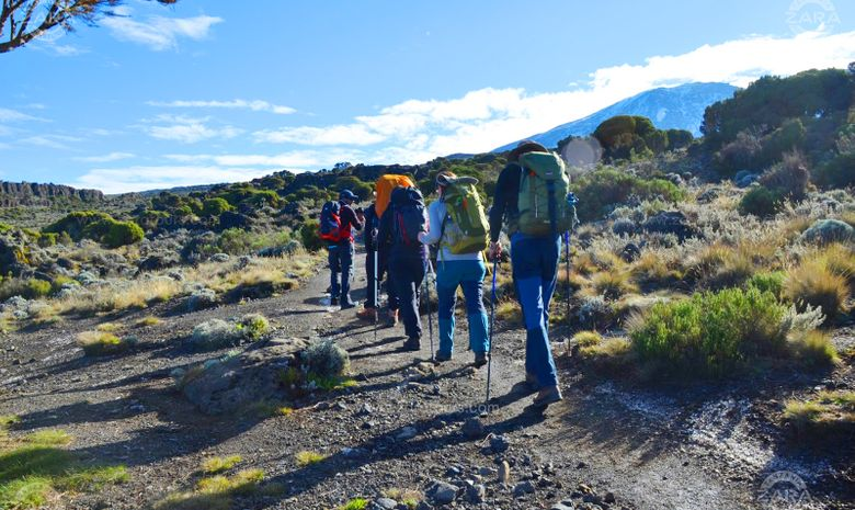 Ascension du Kilimandjaro : Voie Machame