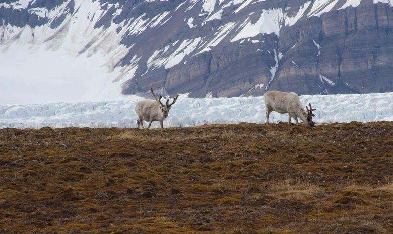 Trek arctique au Spitzberg