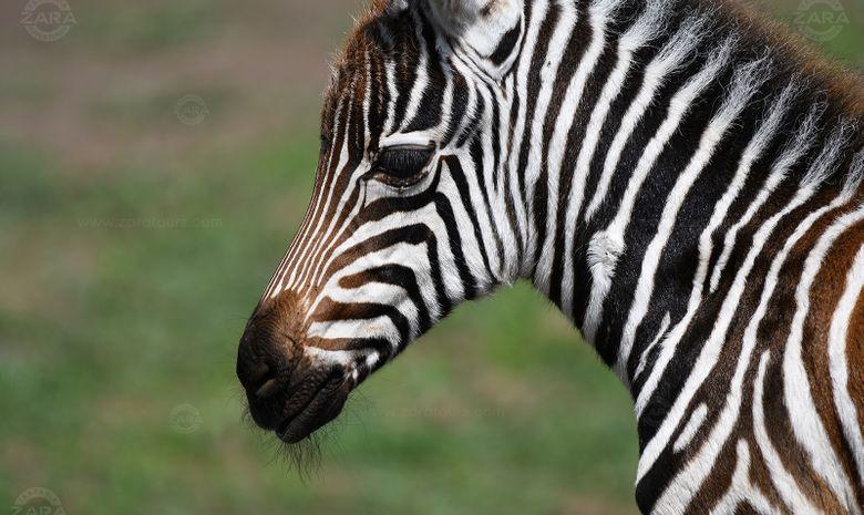 Safari en famille au cœur des parcs de Tanzanie