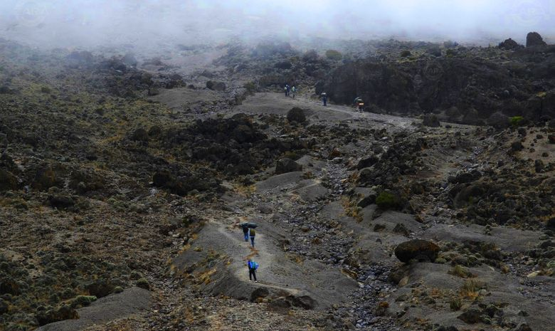 Ascension du Kilimandjaro : Voie Umbwe
