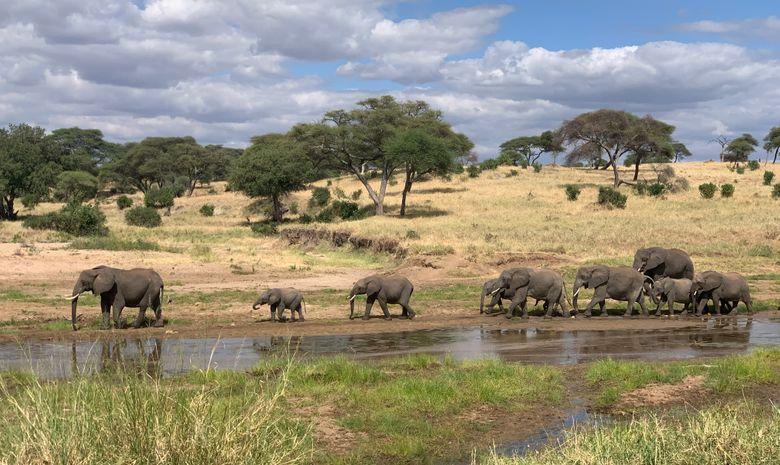 Safari Tanzanie long
