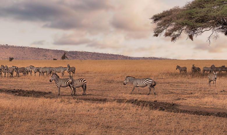 Safari en Tanzanie au coeur des cultures Maasaï