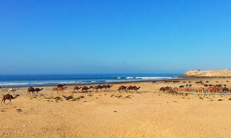 Retraite Yoga & Surf proche d'Agadir sur la plage