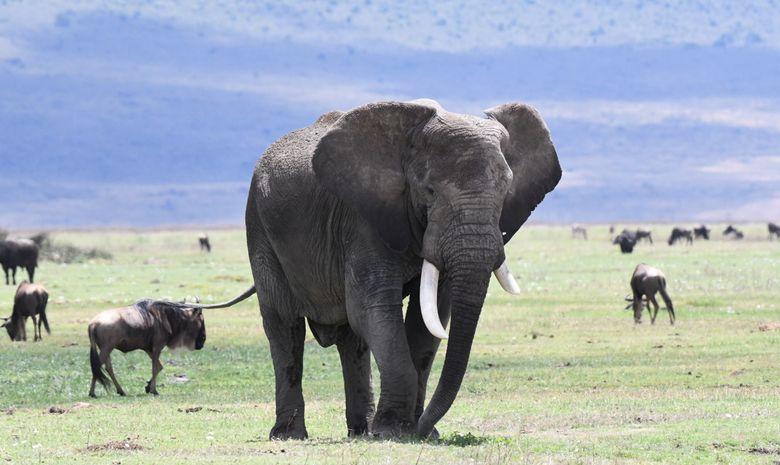 Safari Classique en Tanzanie - Safari en groupe