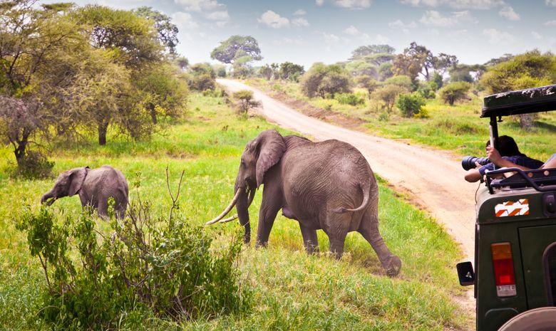 Package safari et Zanzibar