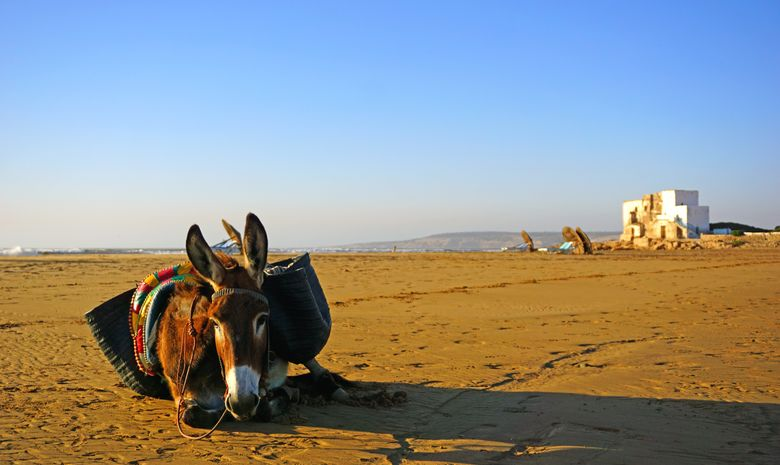Trek en famille au Sud d'Essaouira & Marrakech