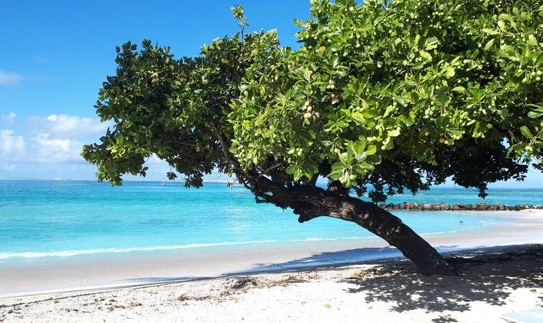 Croisière privée vers Bora-Bora en catamaran 41'