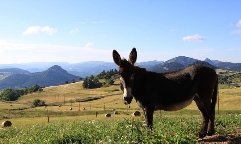 Les sources de la Loire avec un âne en Ardèche