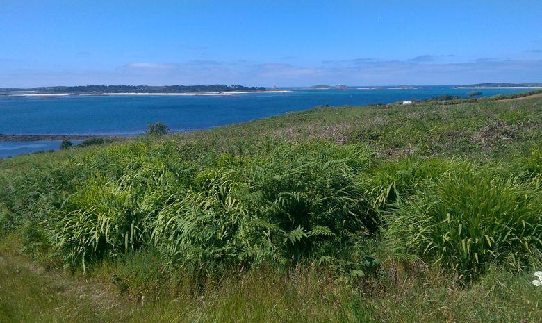 Croisière archipel Scilly du 15 au 26 août-1